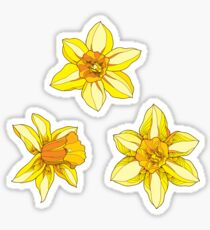 Bouquet with Narcissus or Daffodil. Sticker