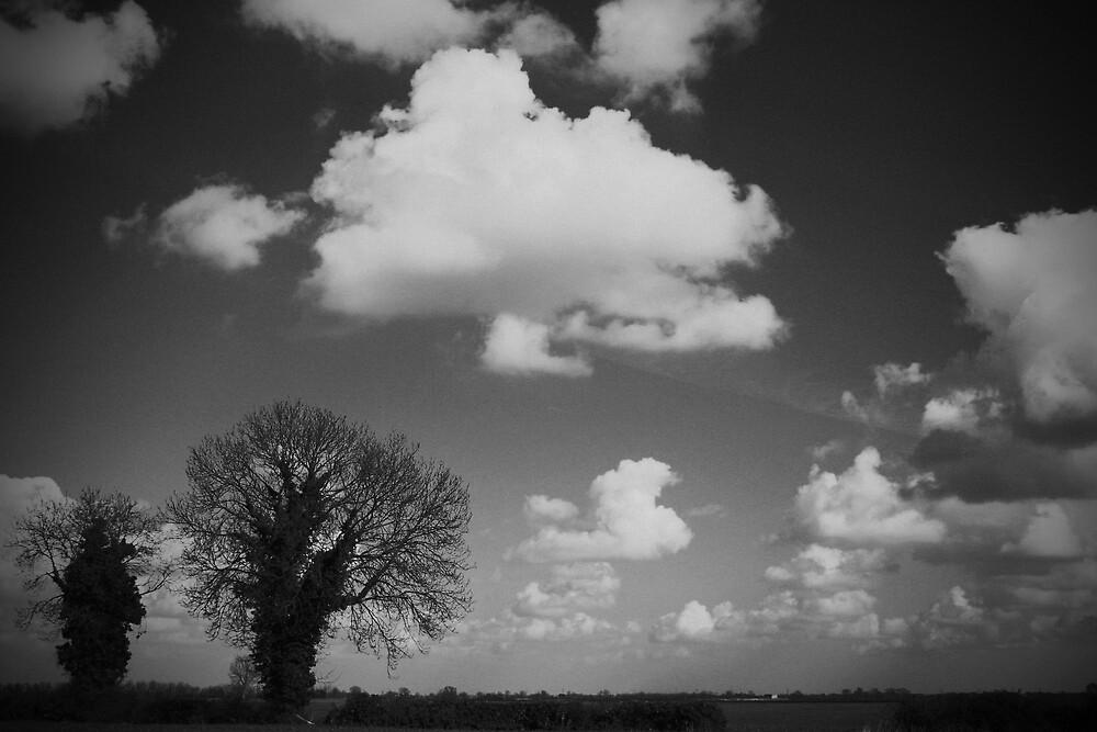 Monochrome Fen by David Pearson