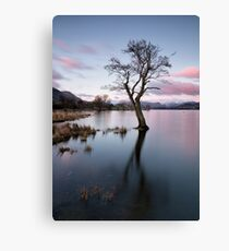Gale Bay Lone Tree Canvas Print