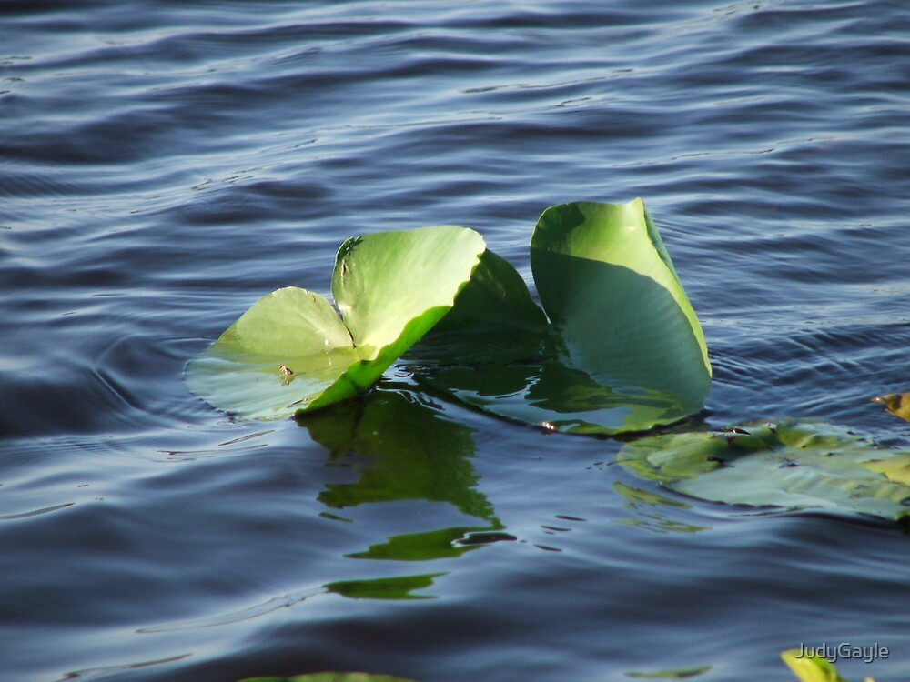 The Lily Pads by Judy Gayle Waller