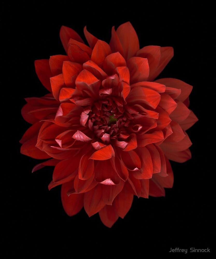 Red Dahlia by Jeffrey  Sinnock