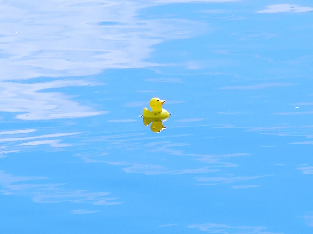 Lone duck by max1210