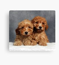 Puffy Poodle Pups Canvas Print
