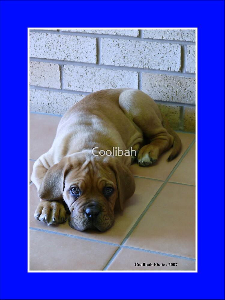 DDB Pup Leroy  by Ruth Anne  Stevens