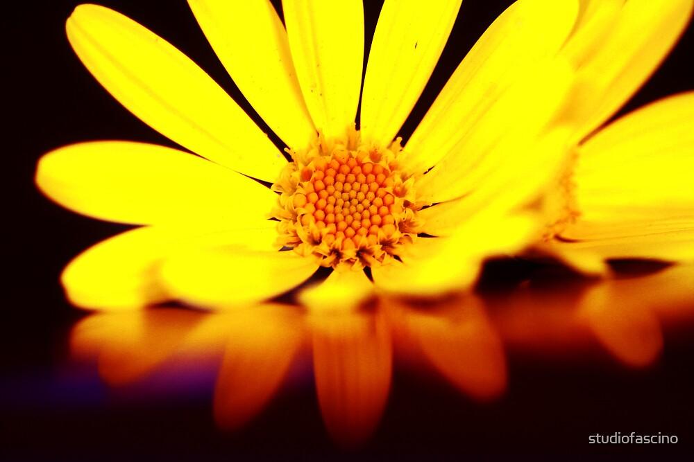 yellow by studiofascino