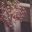 Autumn Berries Wild Berry Fruit Autumn Nature Photograph by MissDawnM
