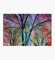 Forest Impression Photographic Print