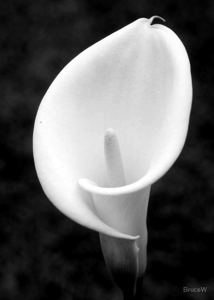 Lilly 2 by BruceW
