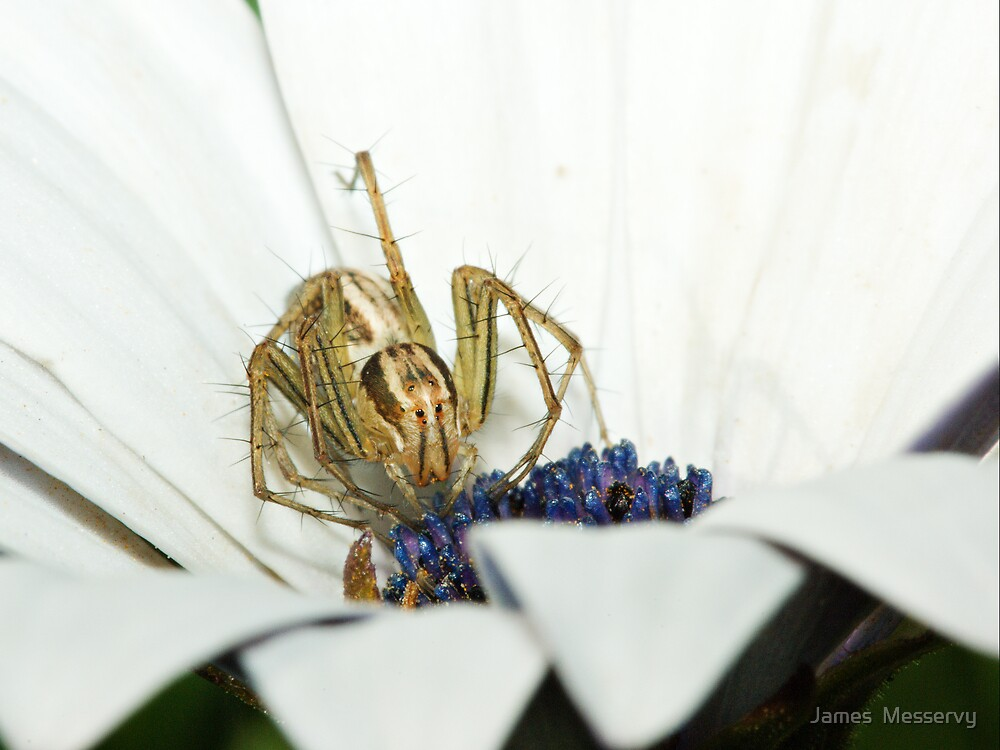 Lynx Spider by James  Messervy