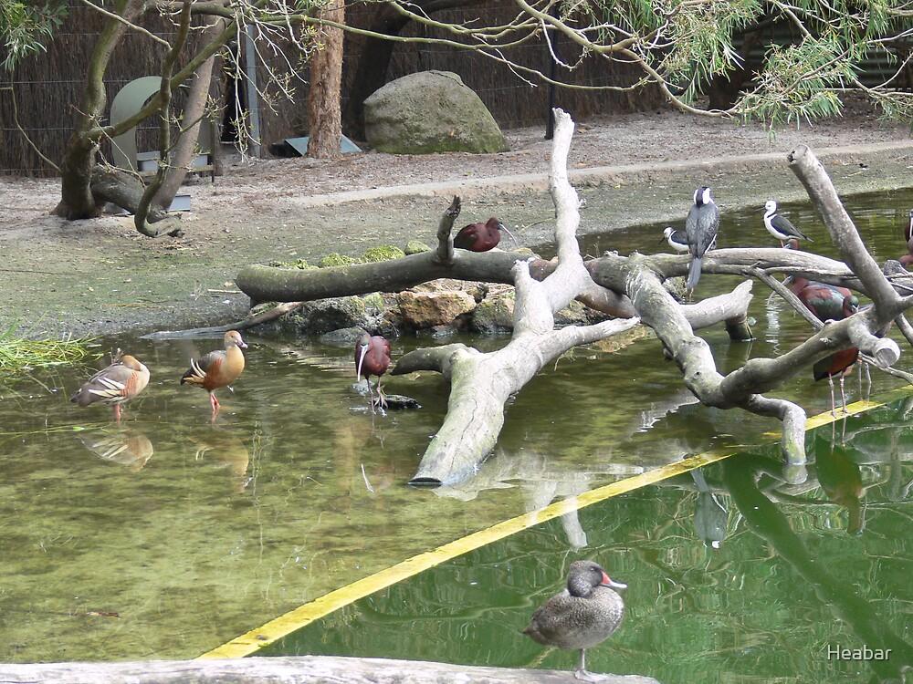 Water Birds  by Heabar