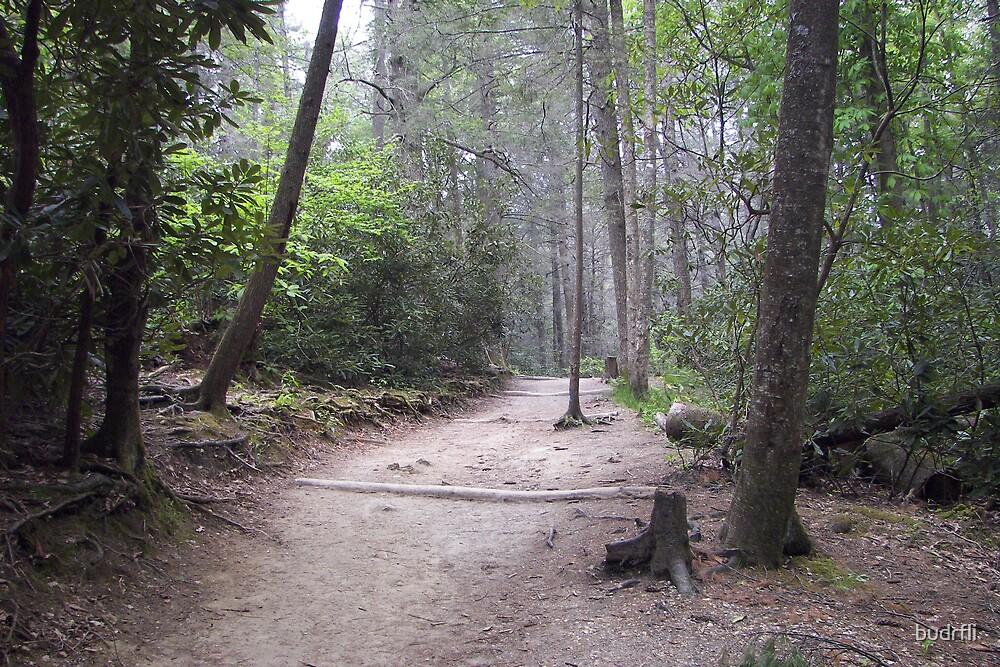 worn path by budrfli