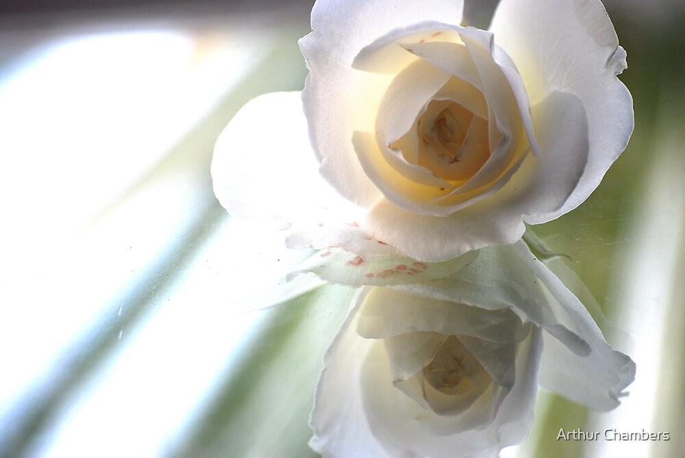 Glass bottom Rose........... by Arthur Chambers