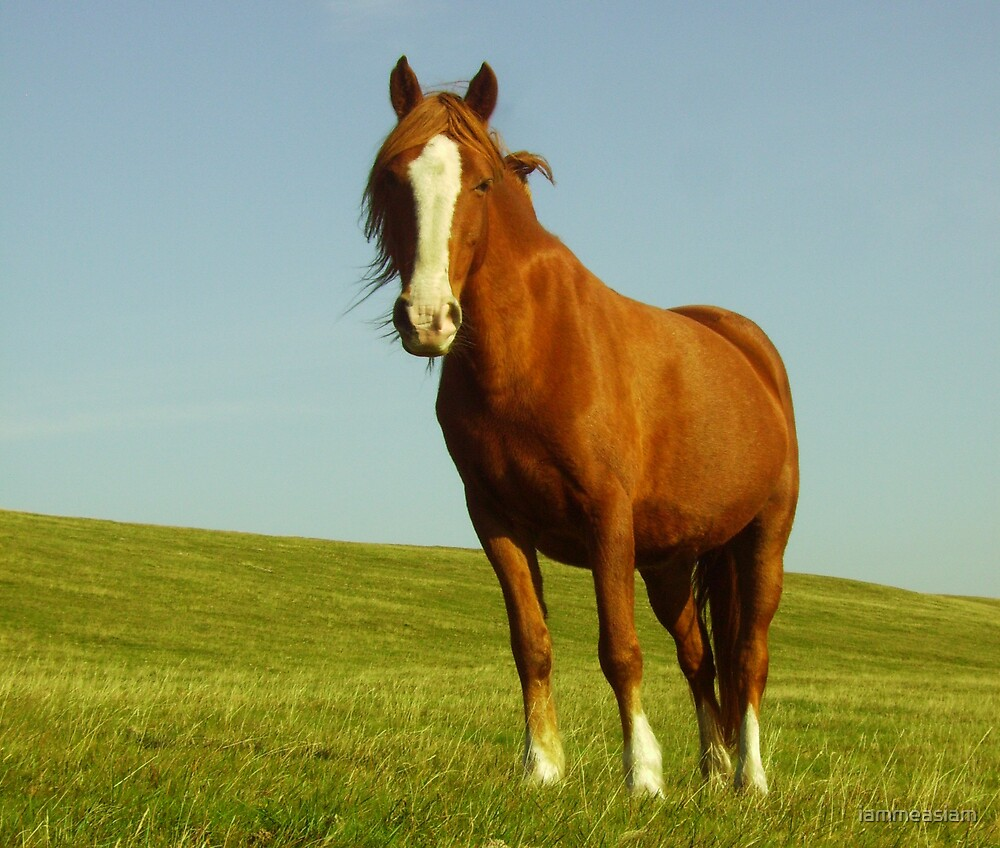 Horse on Bodmin Moor by iammeasiam