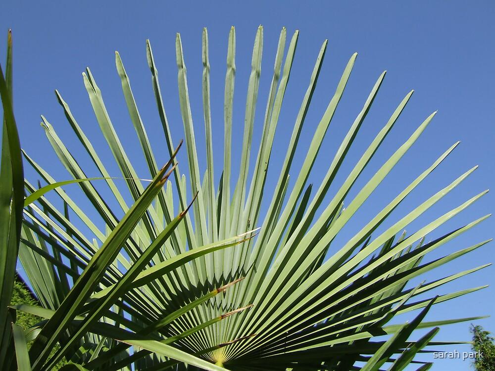 palm horizon II by sarah park