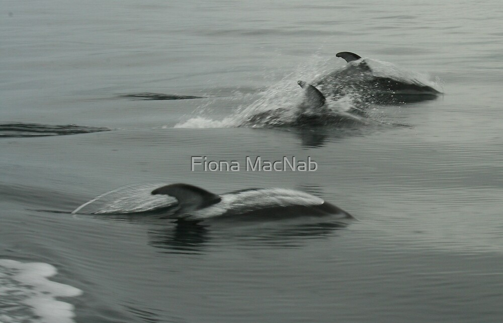 Splash by Fiona MacNab