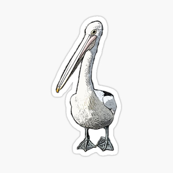 It is a Pelicans Life CARTOON PELICAN BASED ON A REAL PELICAN AT SYDNEY FISH MARKETS Sticker