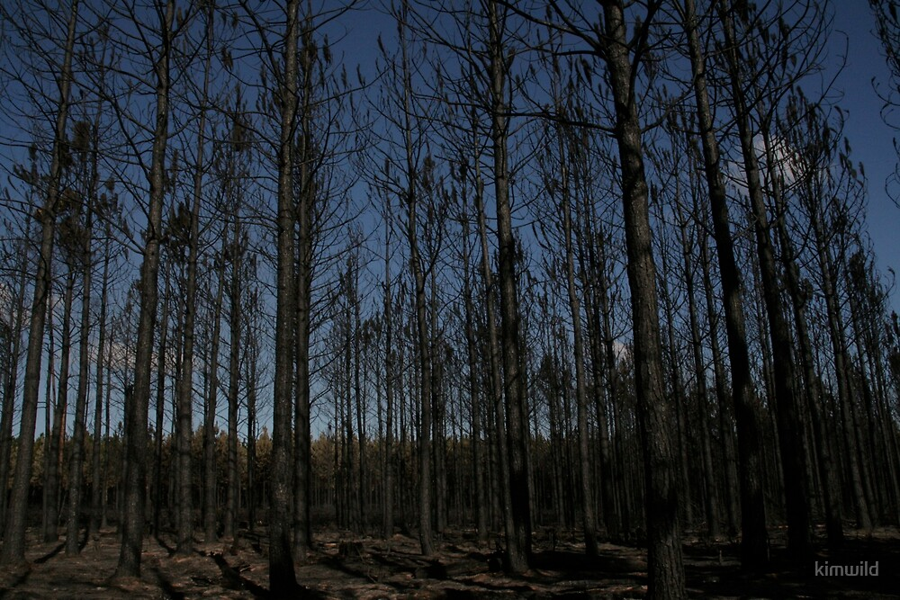Burnt Forest against Blue skies by kimwild