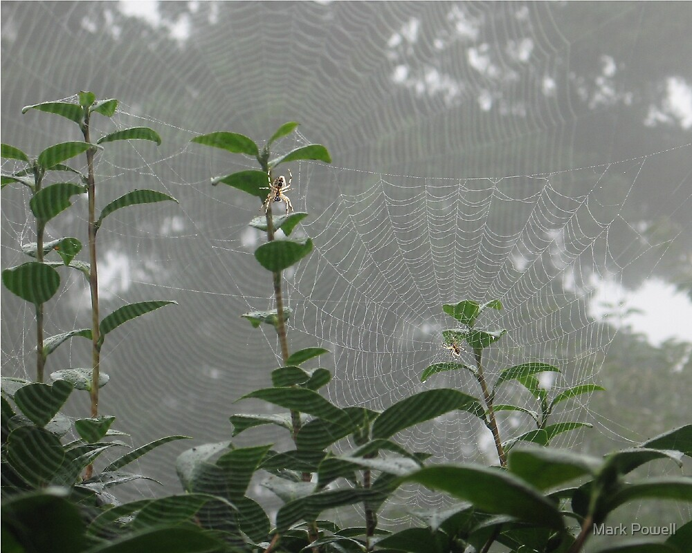 Couple of Spiders by Mark Powell