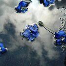 Fallen Delphiniums - Series 2 by Hiroko