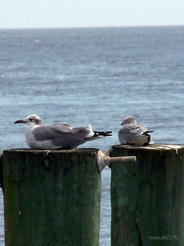 two sea gulls by tomcat2170