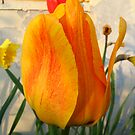 Tulip by MHCM