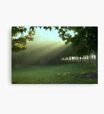 Early rays . . . Canvas Print
