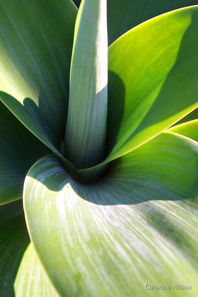 Plant Life  by Christine Wilson