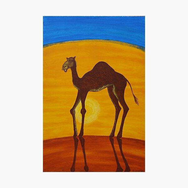 BEAUTIFUL CAMEL (OUTBACK AUSTRALIA) Photographic Print
