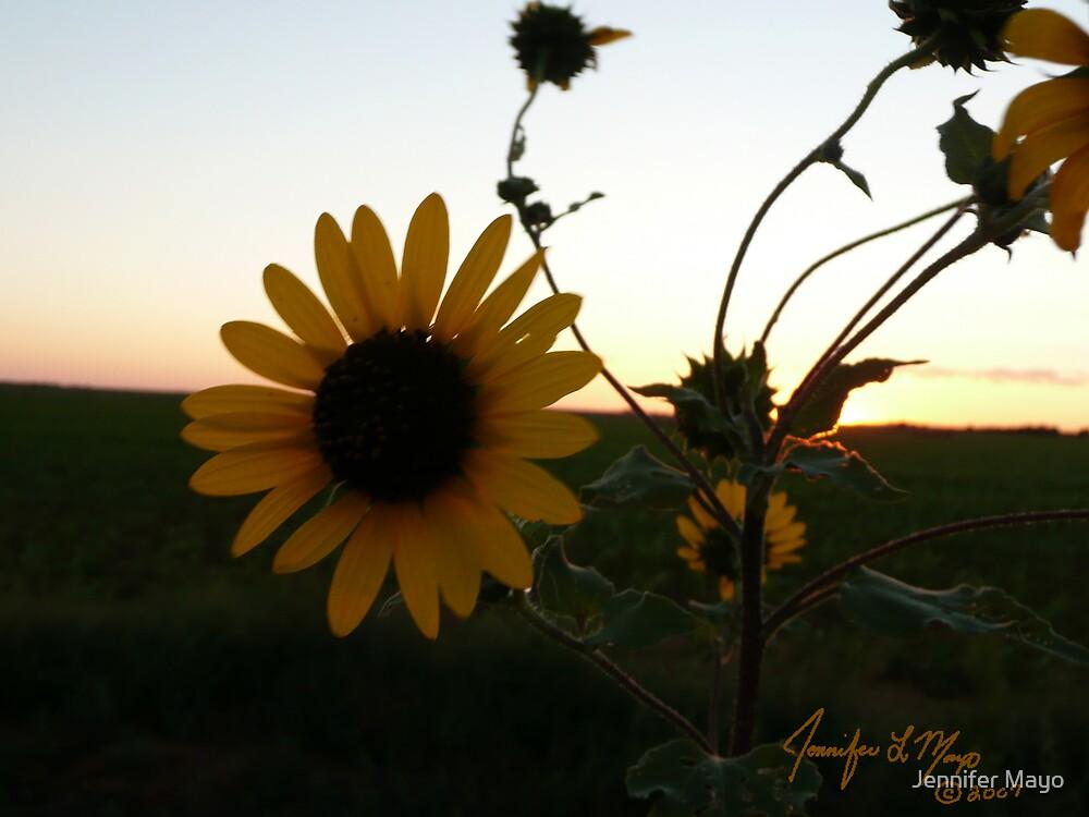 Farewell Sun by Jennifer Mayo