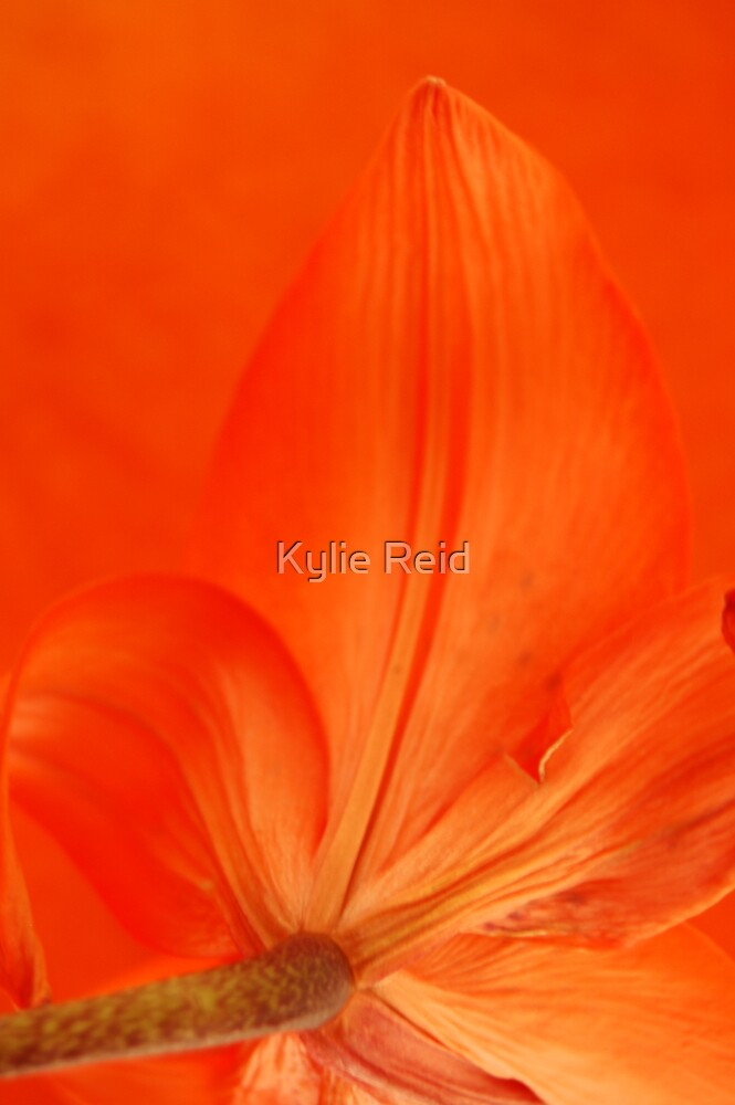 Orange by Kylie Reid
