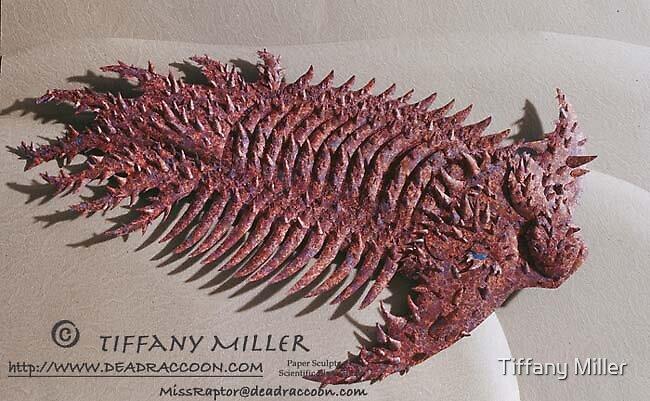 Trilobite: Terataspis grandis by Tiffany Miller