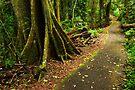 Rainforest in the Dorrigo National Park by Darren Stones
