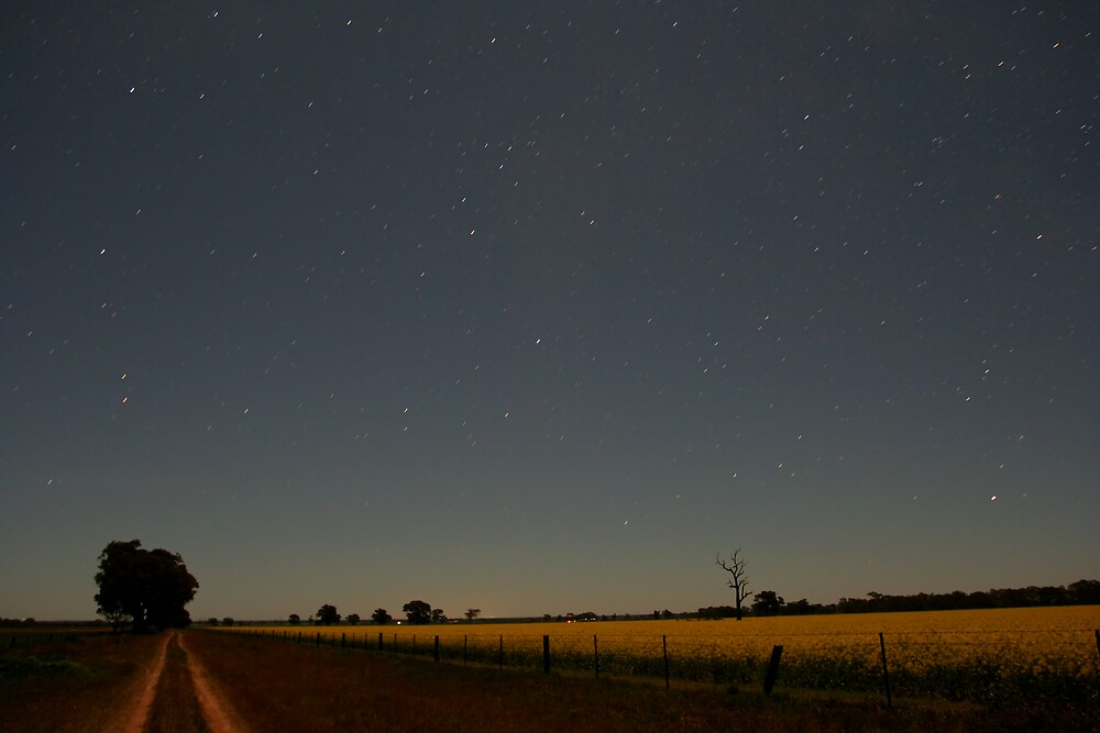 Canola Track And Stars by Lindsay Knowles