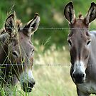 Two Donkeys by TheaShutterbug