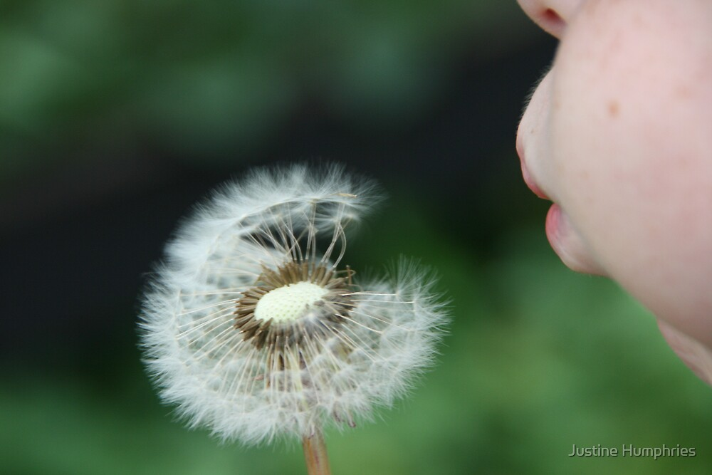 Make a wish by Justine Humphries