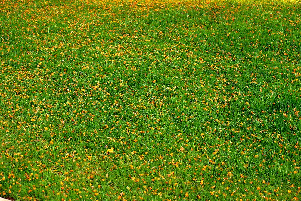 grass amd yellow flowers by x07wave