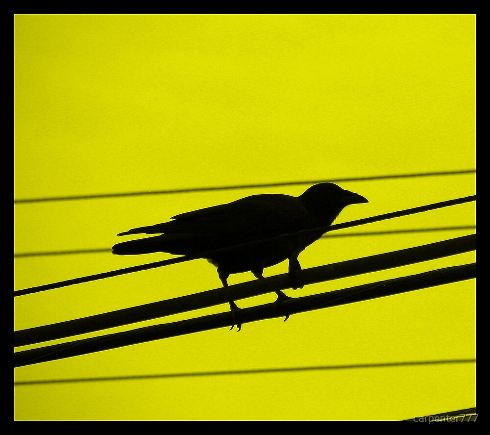 Crow two by carpenter777
