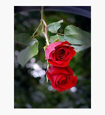 Rose Reflected Photographic Print