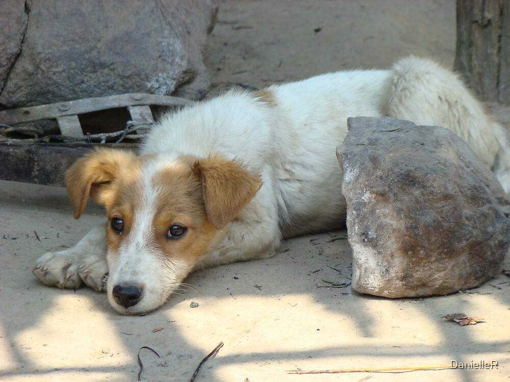 Dog in Zambia by DanielleR