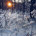 sunset of this winter by Julia  Kovtunyak