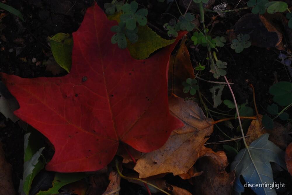Auburn Autumn by discerninglight