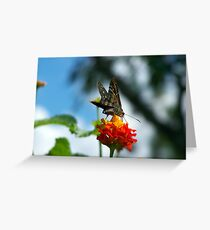 butterfly critter Greeting Card