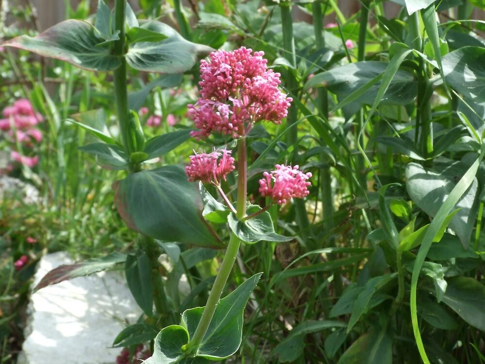 flowers5 by matjenkins