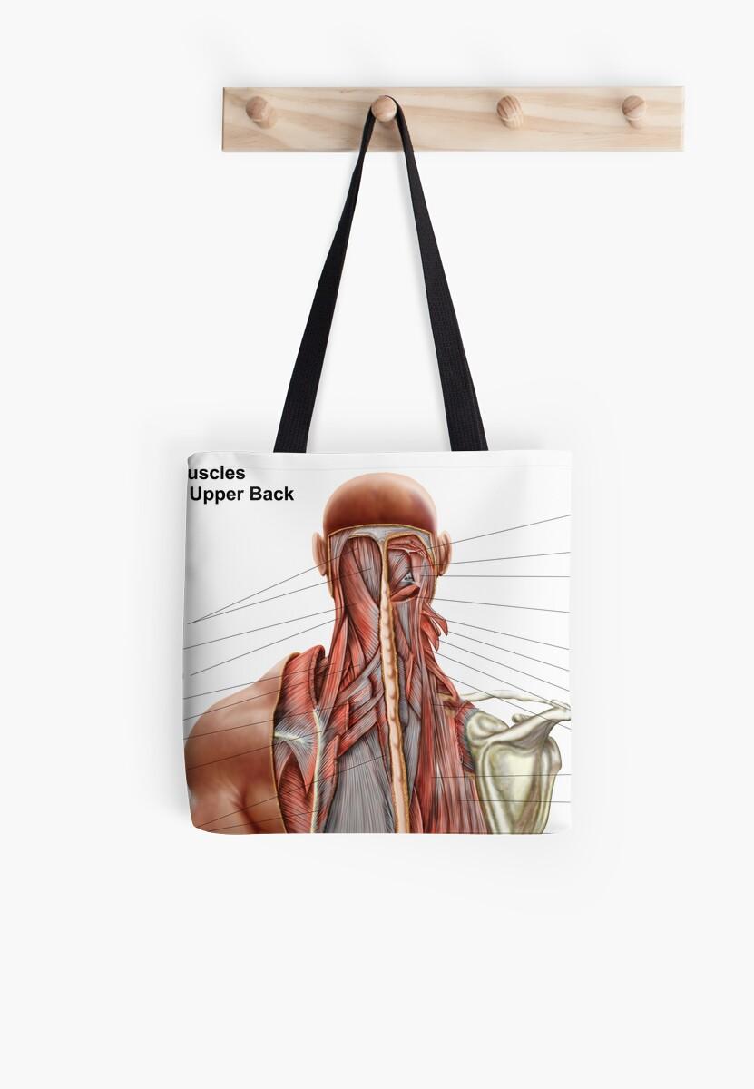 Bolsas de tela «Anatomía humana que muestra músculos profundos en el ...