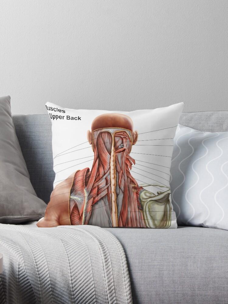 Cojines «Anatomía humana que muestra músculos profundos en el cuello ...