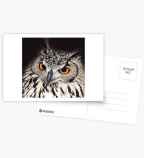 European Eagle Owl Postcards