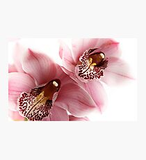 Pink Orchids Photographic Print