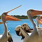 Pelican Choir by Adam Gormley