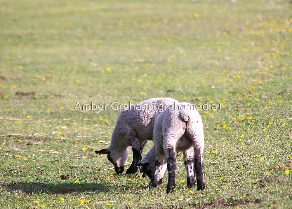 Feeling Sheepish by Amber Graham (grahamedia)