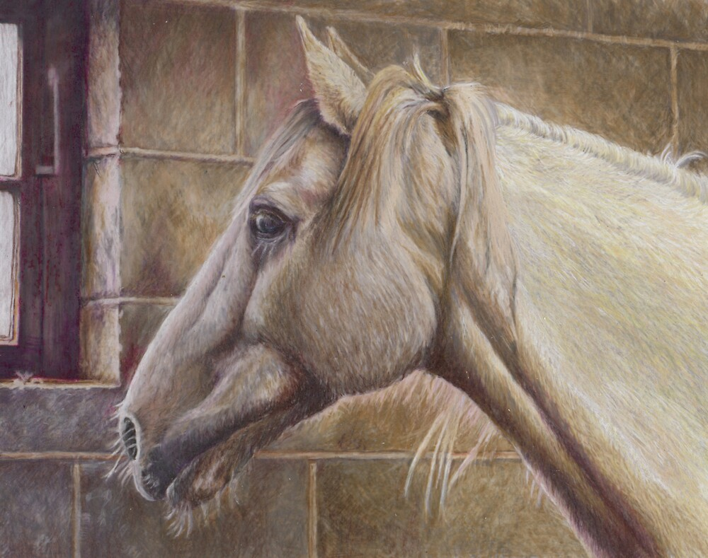 White Horse by Belinda Lindhardt